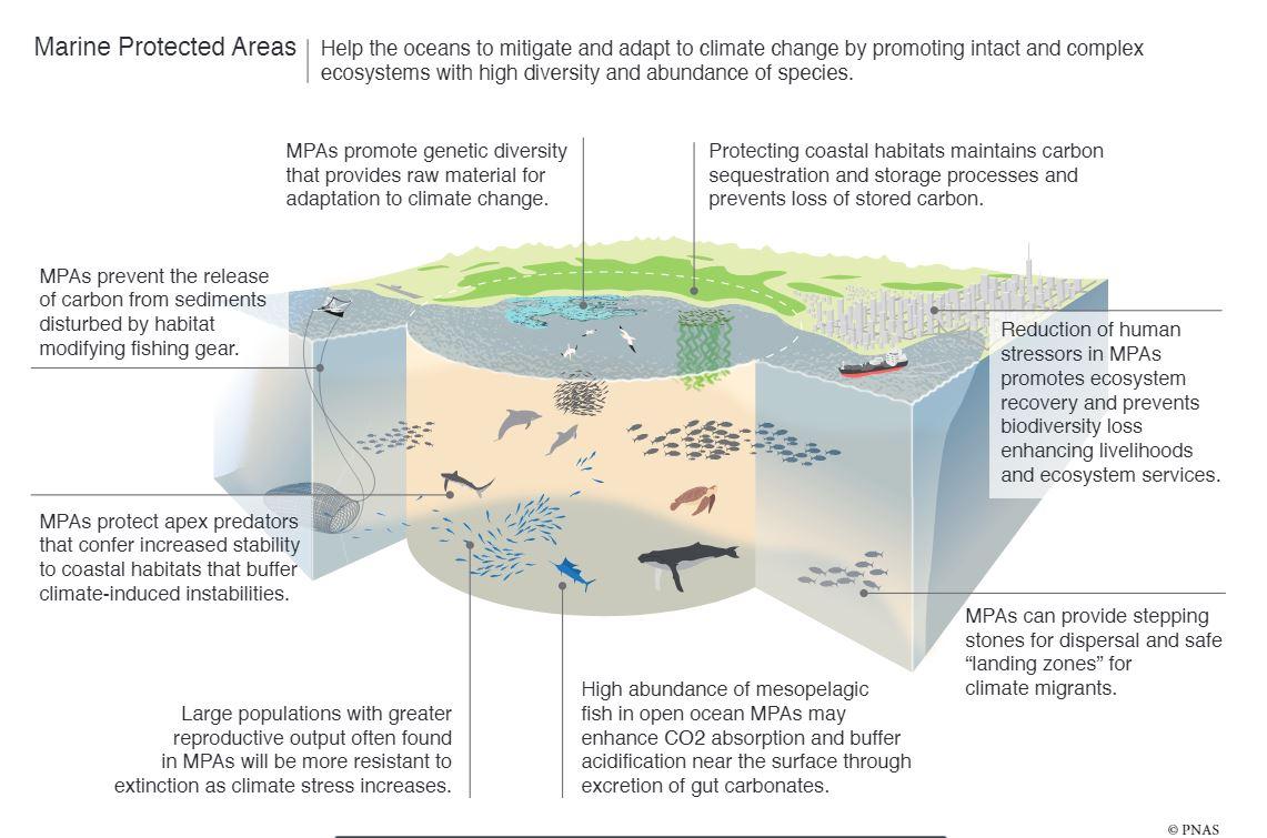 Marine Reserves graph