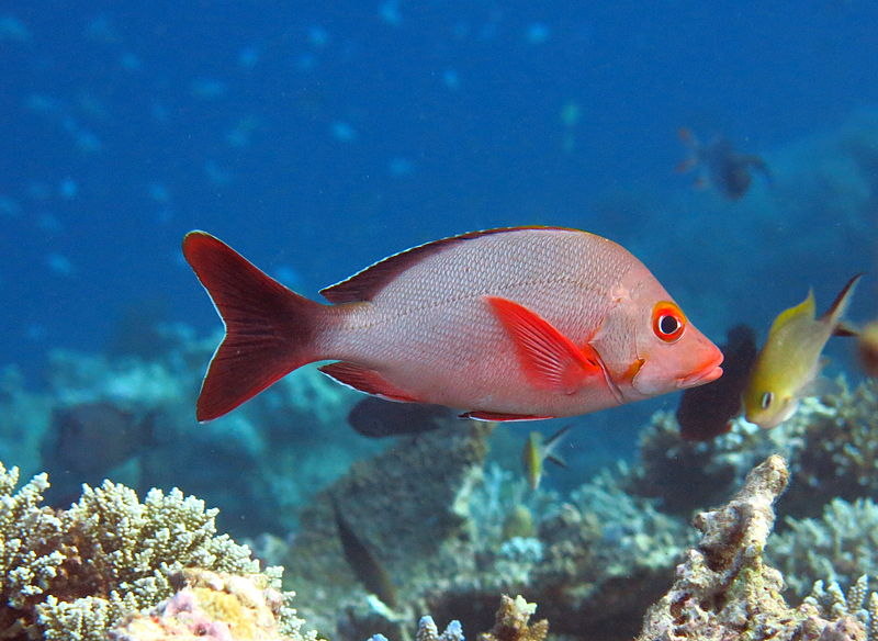 Climate change-threatened Marshall Islands underreporting fisheries stats