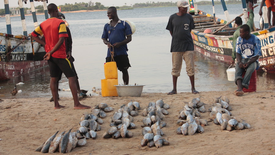Treating fish as a public health asset can strengthen food security in lower income countries